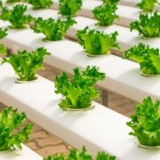 Underground Farming in London
